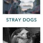 STRAY DOGS-medienboard-gefördert